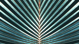 Striped%20of%20palm%20leaf%2C%20Abstract