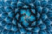 agave cactus, abstract natural pattern b
