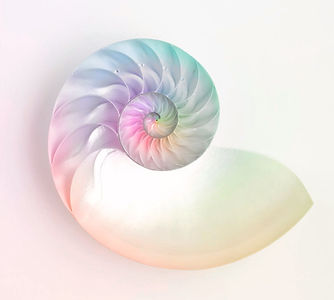 nautilus-shell-angel-rodriguez_edited.jp