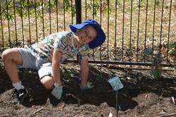 gardening (16)-r47