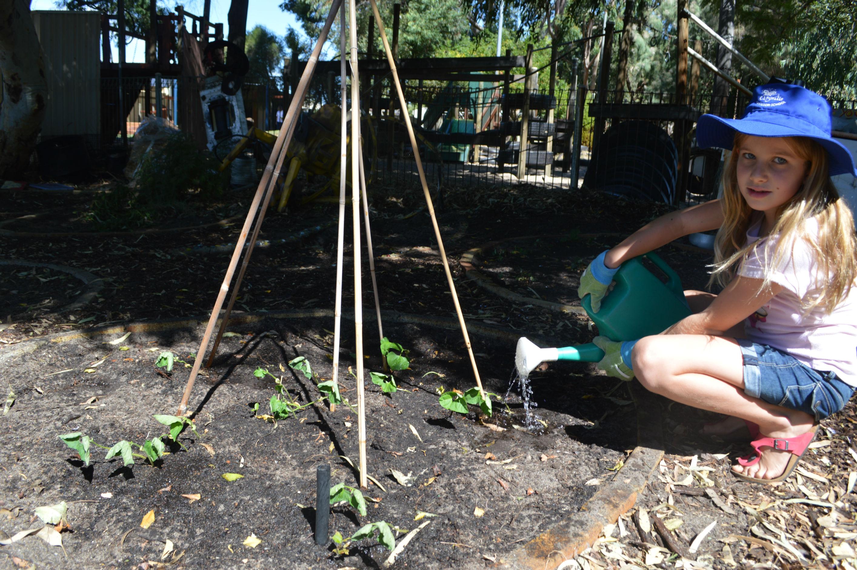 gardening (13)-r47