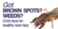 Got Brown Spots or Weeds?