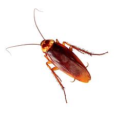 Roaches