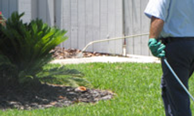 Weed and pest control service