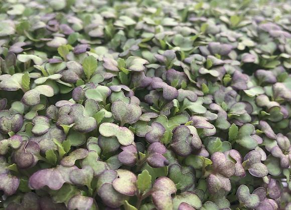 Purple Osaka Mustard
