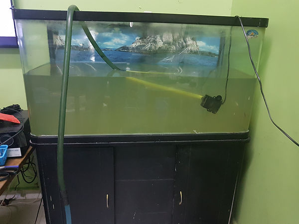 Aquarium Restoration