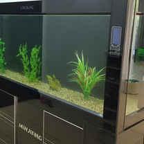 Aquarium Restoration