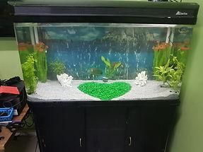 Aquarium Restoration after