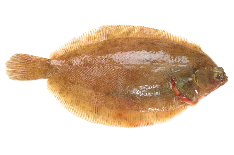 lemon_sole_2