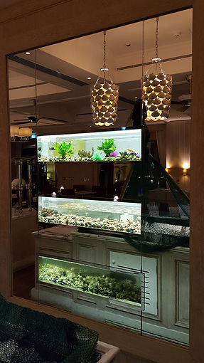 3 Custom Aquariums