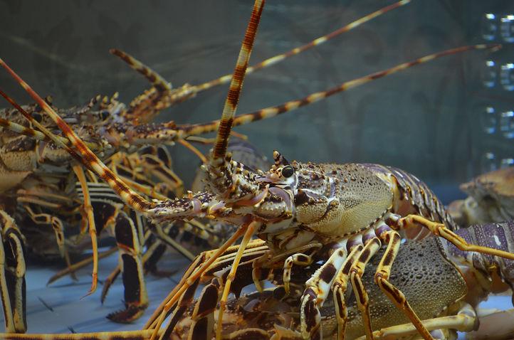 aquatic-close-up-crab-248455.jpg