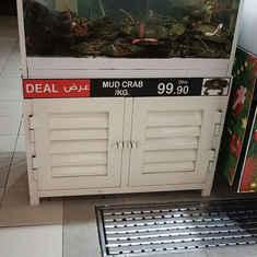 Aquarium Rental