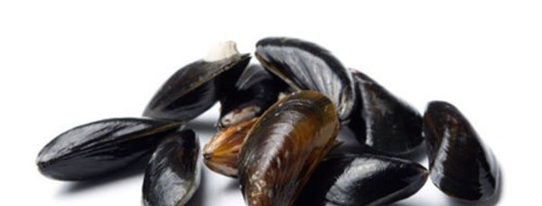FROZEN FULL SHELL MUSSELS