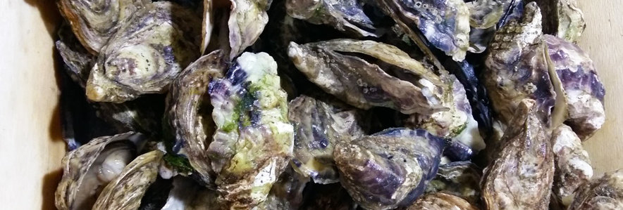 OYSTER (per piece)
