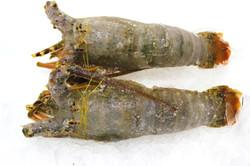 Omani Lobster whole