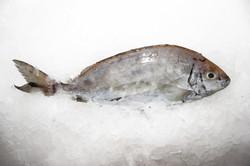 Safi fish