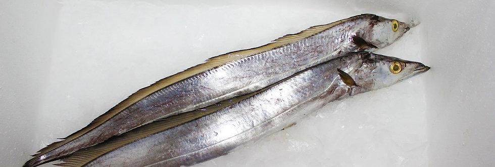 BELT FISH