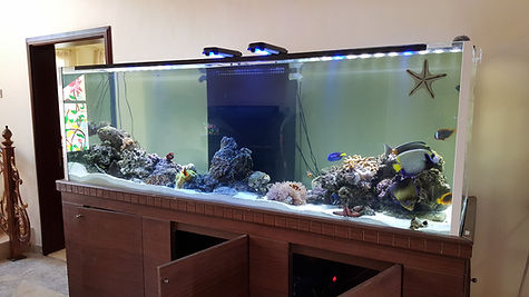 Aquarium Maintenance and Relocation