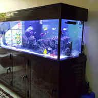 Aquarium Maintenance, Restoration and Relocation