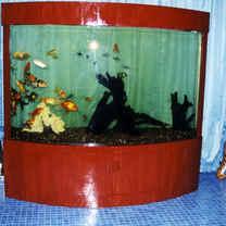Customized Curve Aquarium