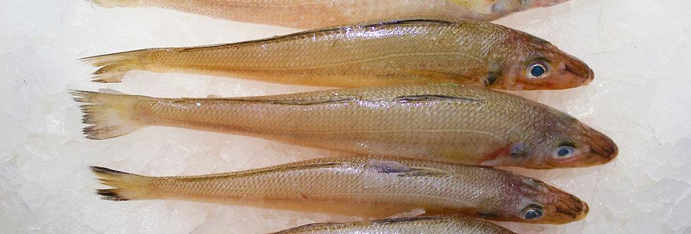 LADY FISH