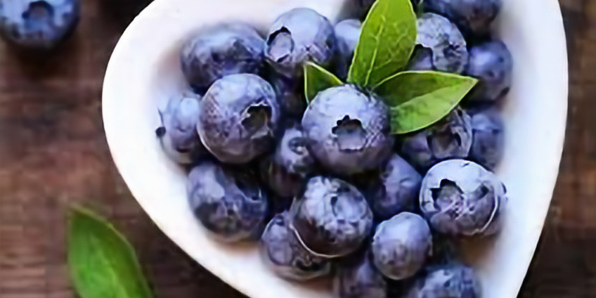 Tatamagouche Wild Blueberry Picnic  Saturday August 24