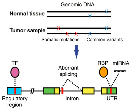 Review article published in Frontiers in Genetics