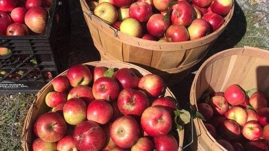Organic Apples-HALF BUSHELL
