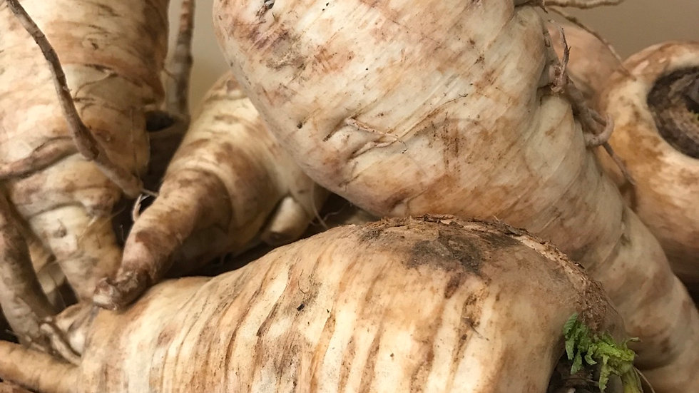 Giant Parsnips -2#