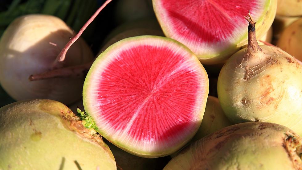 Watermelon Radishes- 3#