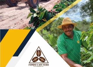 FCN felicita a los productores y productoras de café en el día Nacional de la Caficultura
