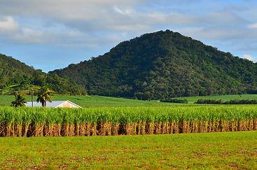 Historyeye | sugar plantation, Maryboro Queensland