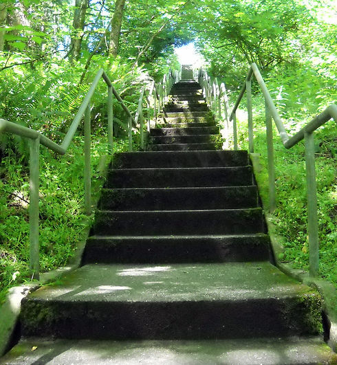 discovery-park-stairs-from-bottom-looking-up.jpg