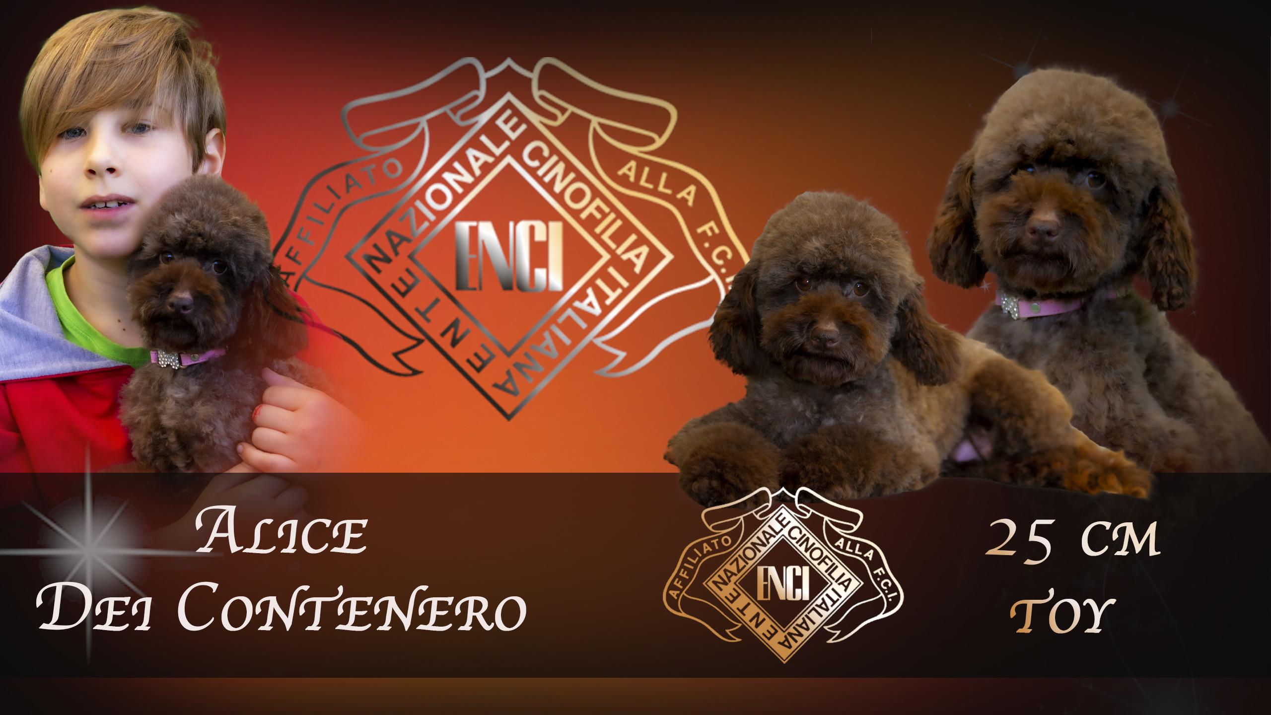 Alice Del Contenero  TOY 25 CM  ***ENTRA***