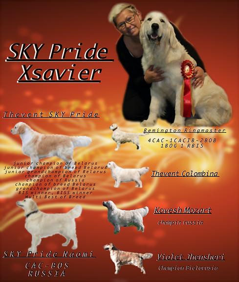 pedigree xsavier .png