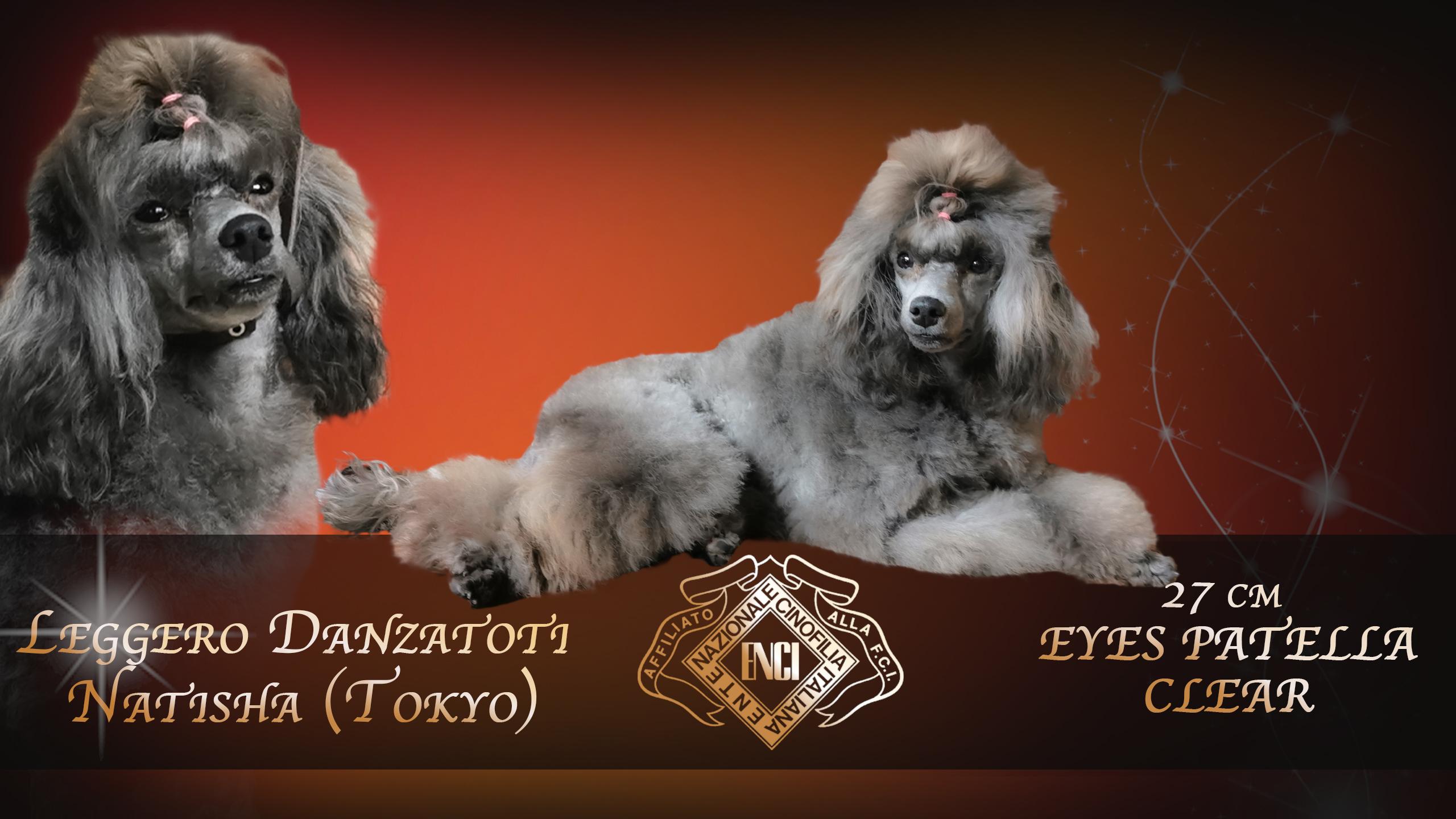 Leggero Danzatori  (Toko) TOY 27cm ***ENTRA***