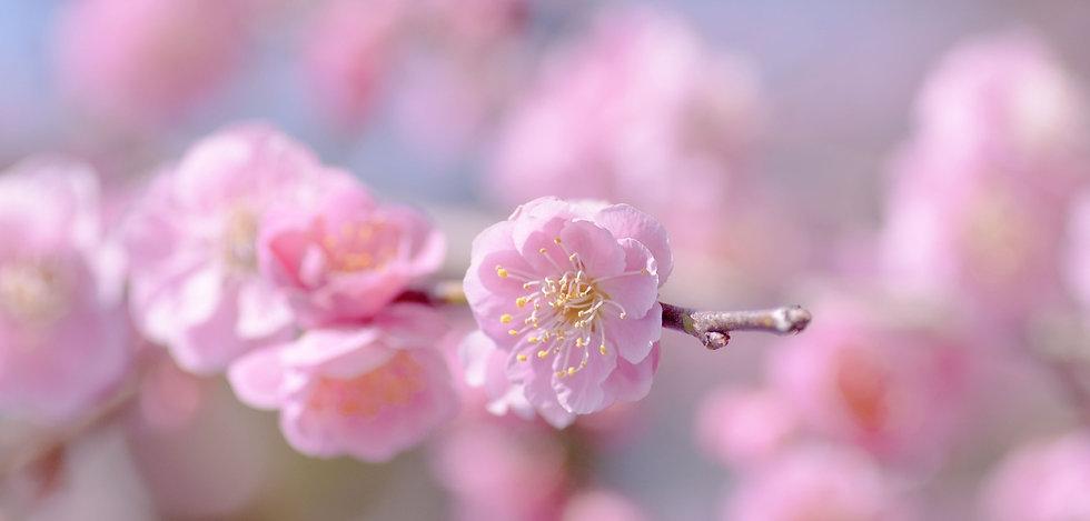 252405_rozowe_kwiaty_galazka copia 2.jpg