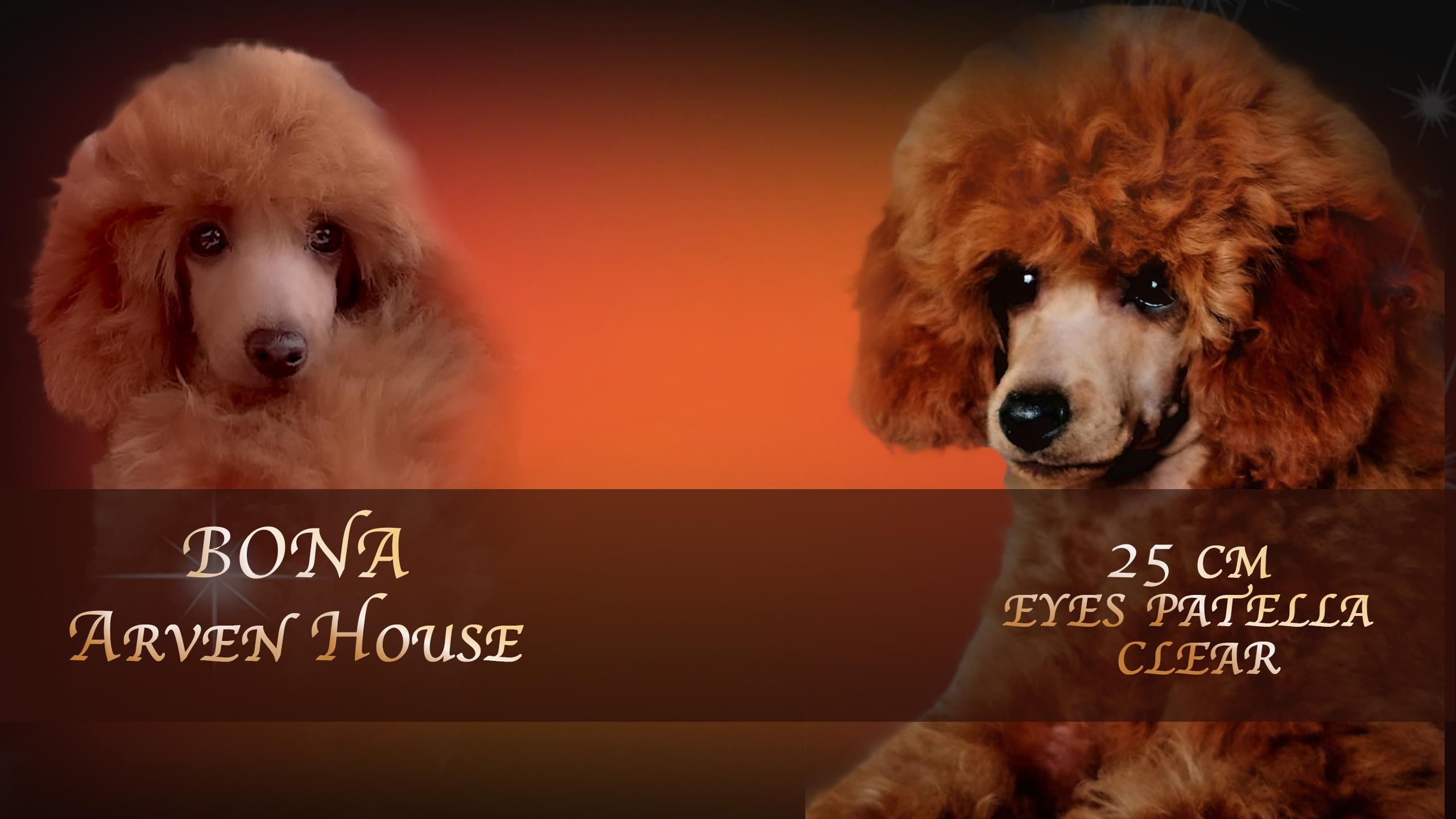 Bona Esmeralda Arven House  25 CM ***ENTRA***