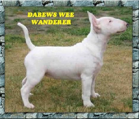 Dabews Wee Wander.jpg