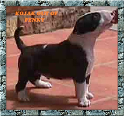 Kojak Out of Penny.jpg