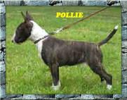 Pollie.jpg