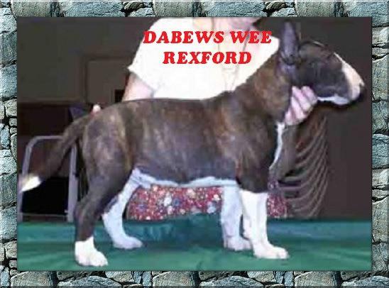 Dabews Wee Rexford.jpg
