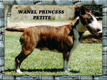 Wanel Princess Petite.jpg