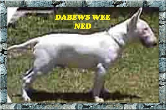 Dabews Wee Ned.jpg