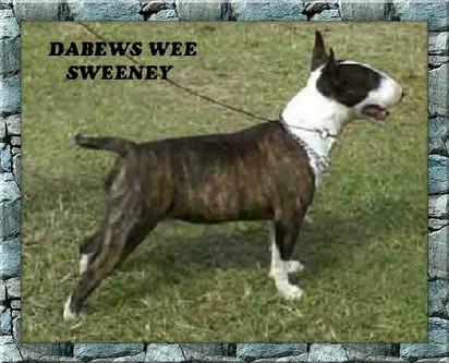 Dabews Wee Sweeney.jpg