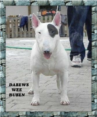 Dabews Wee Ruben Front.jpg