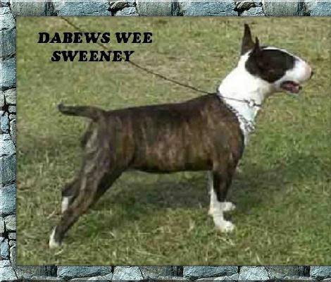 Dabews Wee Sweeney