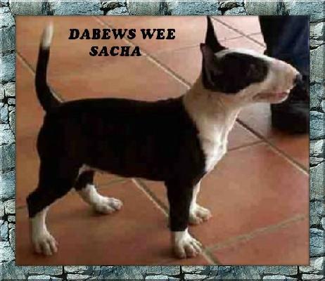 Dabews Wee Sacha.jpg