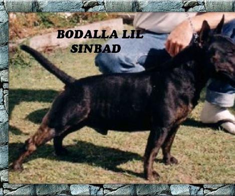 Bodalla Lil Sinbad.jpg