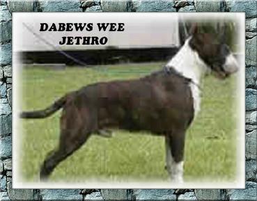 Dabews Wee  Jethro.jpg